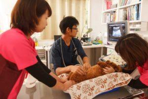西京の森どうぶつ病院 診療