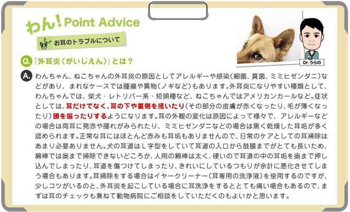 犬・猫 耳をかゆがります。外耳炎とは何でしょうか?