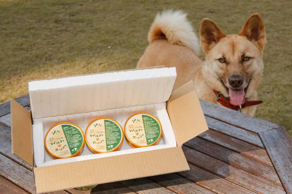 愛犬用アイス
